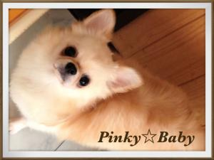 Pinky☆Baby