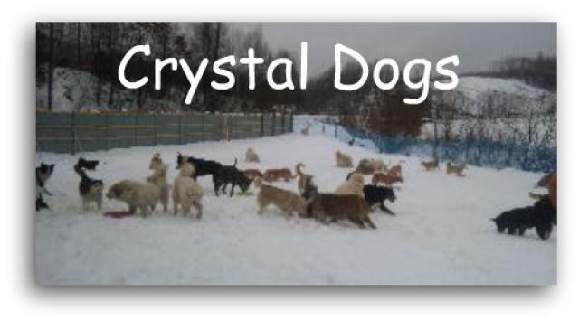 Crystal Dogs