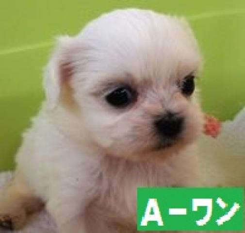 ペット情報総合サイトPETPET-長野県にあるペットショップ