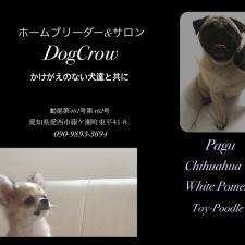 DogCrow