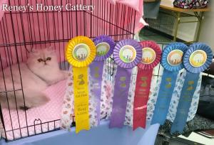 Reney's Honey Cattery