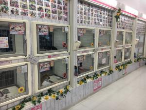 コーナン ペットプラザ 和歌山店 - 和歌山県 - ペットショップ