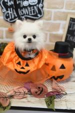 HAPPY HOLLOWEEN(*^^*)