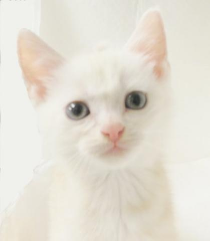 アゴはネコ ★猫ちゃん専門店★