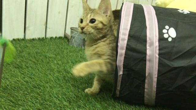 犬の魂を宿した猫☆性格抜群ストーカー猫☆