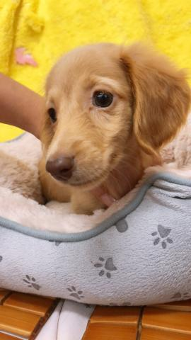 ㊗️只今!! 子犬💕仔猫❣️最愛なる可愛いキャンペーン中‼️❤️
