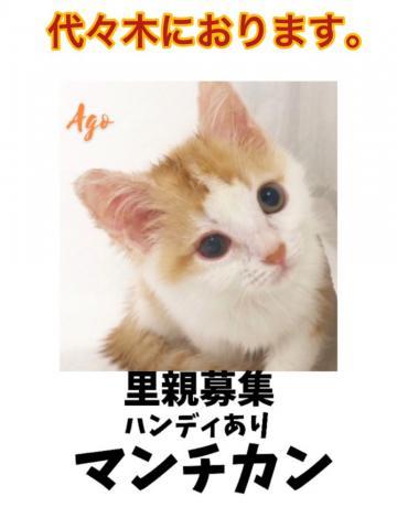 アゴはネコ ★猫ちゃん専門店★ ハンディがある子猫里親